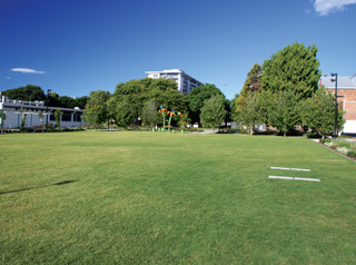 Toowoomba Civic Square grass