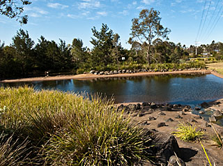 Murray Clewett Wetlands Toowoomba